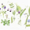 Fleurs-Flowers-© Olivier Loir