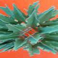 Der Holly Wreath in grün = klar, soll ein Adventskranz sein.