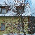 Gîte La Maisire en hiver