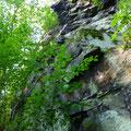 Felssporne an der Westkante des Burgberges