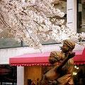 宝塚「花の道」にて。満開の桜と、踊る男女の像。春爛漫です。