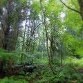 高村光太郎が住んだ「高村山荘」を取り巻く鬱蒼とした林。今でも野生の動物に出会うそうです。