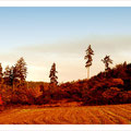 "N° 0023 LS   ""Indian Summer im Sauerland"""