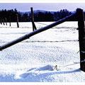 """N° 0065 LS   """"Eingezäunter Winter"""""""
