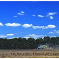 """N° 0142 LS """"Harvest"""""""