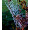 """N° 0007 LS   """"Spinnennetz mit Raureif"""""""