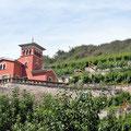 Weingut bei Freyburg