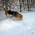zwei Nasen im Schnee