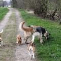 Hundebande von hinten