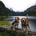 die zwei Beagle Damen