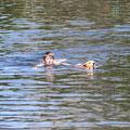 Emma beim Schwimmen