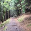 im Wald geht es hinauf