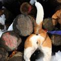 Beagle-Popo - was suchen wir denn?