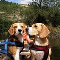 Beaglebande