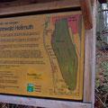 """Seit Jahren ist der Hollmuth ein """"Bannwald"""" / PeWe"""