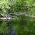 Hummelberg-Teich