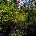 Leuchtender Herbstwald - P. Welker