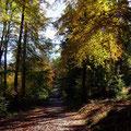 Leuchtendes Herbstlaub - Foto PeWe