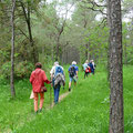 Durch den Kiefernwald - Foto Wolf Seidel