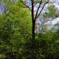Hochgewachsene Bäume am Teichrand...