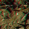 Ödlandschrecke  (c) pewe