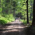 ...verloren in den tiefen Wäldern des Odenwaldes
