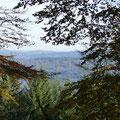 Lauter Bäume: der Odenwald - Foto W. Seidel