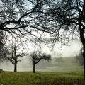In Kälte erstarrt sind die Bäume (und die Finger)
