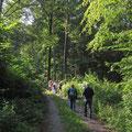 Durch schattigen, kühlen Wald im Laudenbachtal  (Bild: Ingo Pedal)