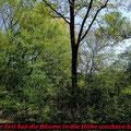 Schatten durch aufgeschossene Bäume