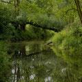 ...gut gesehene Natur-Ästhetik   © H. I.