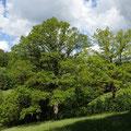 Wald- und Wiesenlandschaft - Foto I. Pedal