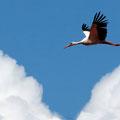 Storch im Anflug (wir haben ihn nicht gesehen, aber immer im Blick)
