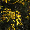 Blätter im Herbstlicht - I. Pedal