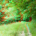 Dieser Weg führt hinab zum Neckar