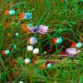 Gänseblümchen - lieber von oben ...! - Foto P. Welker