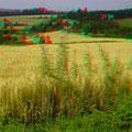"""Hügel des """"Kleinen Odenwaldes"""""""