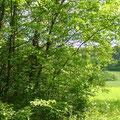 ...einem Naturparadies direkt vor unserer Haustür!