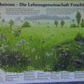 Belehrendes in Walldorf...  (c) pewe