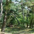 Schattenspendender Wald