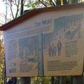 Die Funktionen des Waldes - Foto PeWe