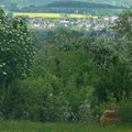 Blick in den Kraichgau (Bammental - idyllisch)