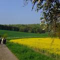 Die Exkursion beginnt an der Landstraße zwischen Wiesenbach und Lobbach