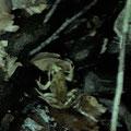 Ein Frosch versteckt sich
