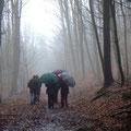 Auf dem Heimweg durch den Hollmuth-Wald / PeWe