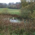 Älterer Teich, verlandend durch Einschwemmen von Sedimenten