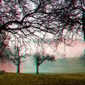 Nebel in der Streuobstwiese