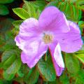 ...mit schöner Blüte