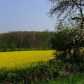 Wiesen, Felder, Streuobst - eine gute Mischung