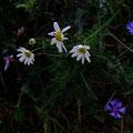 ...mit letztem Blumengruß